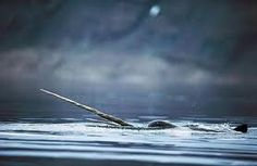 Image result for ominous narwhal