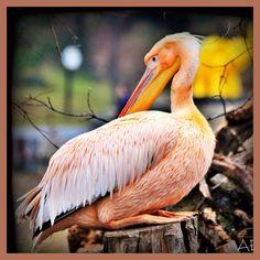 Flamingo by AngelEowyn