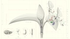 Macoto Murayama, a 29-year-old botanist and designer, carefully dissects and models flowers using 3D drafting software.