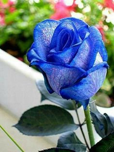 Hermosa flor azul...