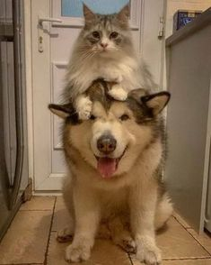 Funny Animal Pictures, Cute Funny Animals, Cute Baby Animals, Funny Dogs, Animals And Pets, Cute Cats And Dogs, Cats And Kittens, Pet Dogs, Dog Cat