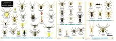 uk spiders - Google Search
