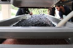 Gary Farrell Winery #harvest14 Sonoma County, Harvest, Wine