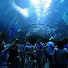 Georgia Aquarium –  -- I'd love to share #Atlanta with you! Please vote once a day for me to be @Jauntaroo's Chief World Explorer at http://www.bestjobaroundtheworld.com/submissions/view/1280