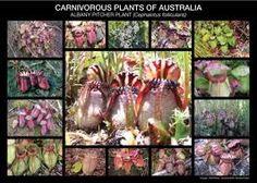 carnivorous plants - Google Search