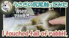 うさぎの尻尾触ってみた【ウサギのだいだい 】I touched tail of rabbit. 2016年6月18日