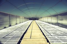 Quonset Tunnel Commercial Greenhouses