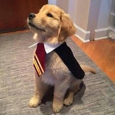 Ideas & Accessories for your DIY Harry Potter Halloween Dog Costumes - maskerix.com #DogCostumes