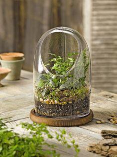 Oval Top Glass Terrarium | Gardener's Supply