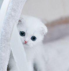Всех котят разобрали кроме белого снежка