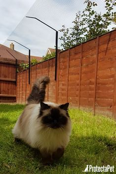 This is a ProtectaPet® Cat Fence Extension Kit to cat proof the perimeter of a garden fence or wall which is between - tall metres). Cat Fence, Fence For Dogs, Dog Proof Fence, Outside Cat Enclosure, Dog Garden, Cat Run, Outdoor Cats, Cattery, Cat Life