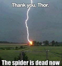 Dead Spider More