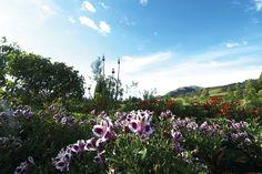 Jardines – Hacienda el Salitre