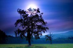 Amazing Woods by Janek Sedlar