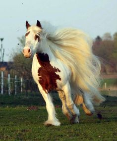 Horse running like a dream!