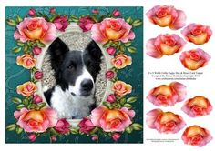 8 x 8 Welsh Collie Dog Roses Card Topper Decoupage on Craftsuprint - Add To Basket!