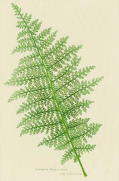 Andie: Our love fern! You let it die!   Ben: No, honey, it's just sleeping.