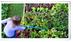 Teaching #gardening to feed the #hungry. http://www.naturesfootprint.com/plant-row-hungry-sharing-garden-abundance