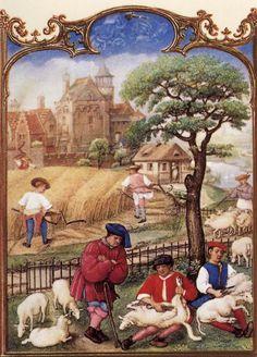 Le fatiche di Luglio: mietitura del grano e tosatura delle pecore - Breviario Grimani - manoscritto miniato - scuola Gand-Bruges - 1490-1510 -  Venezia - Biblioteca Nazionale di San Marco.