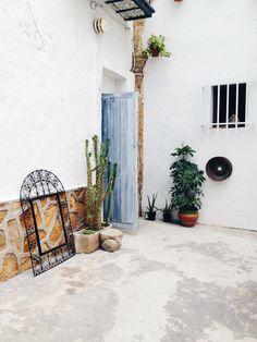 the hanging plants | conil de la forntera