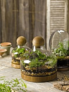 "Glass & Wood Terrarium @ Gardener's Supply. --even on sale, way out of budget. Large is 10 1/2"" W by 13"" tall; opening at top is 3"". $40; Small is 7""x10""; $30."