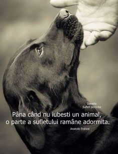 The world is full of looks . but eyes that look at you with Sincerity and Love there are very few! I Love Dogs, Puppy Love, Cute Dogs, Animals And Pets, Cute Animals, Animals Planet, Pet Station, Happy Paw, Pet Clinic