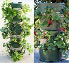 jardín vertical columna de macetas- fresas