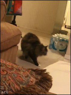 ACG • CAT GIF • Big Ninja Cat strikes again jumping over bro flying like a rocket