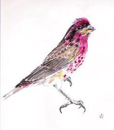 Purple Finch by Pintor