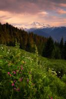 Mt. Baker Wildflowers