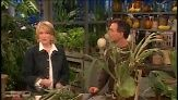 Owner of Logee's Greenhouses Byron Martin joins Martha Stewart and divides a large staghorn fern and makes a wooden frame to mount and hang ...