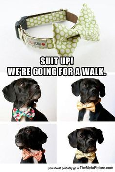 Dog Bow Ties Are Cool