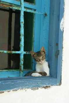 Kitty in the Window by TrueBloodHunter I Love Cats, Crazy Cats, Cool Cats, Kittens Cutest, Cats And Kittens, Cat Window, Gatos Cats, Curious Cat, All About Cats