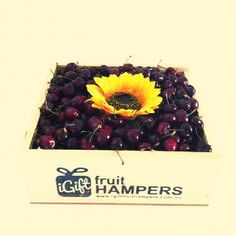 Send a bright beautiful Sunflower Gift & Cherry Hamper to on mothersday to just brighten up their day!Go on!   #cherry #mothersday #FruitHampers#FruitHamper#GiftHampers #HampersAustralia #gifts #freedelivery #giftbaskets #baskets #giftbasketssydney #giftbasketsmelbourne #giftbasketsaustralia #fruit #box #gifts #sympathy #birthday #anniversary #getwell #gifts #occasions #australia #sydney #melbourne #canberra #brisbane #freeshipping #igiftFRUITHAMPER. #Chocolate