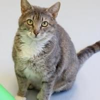 Available Pets At Watauga Humane Society In Boone North Carolina Humane Society Pets Animals
