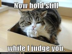funny cat pictures - Now hold still  while I judge you.