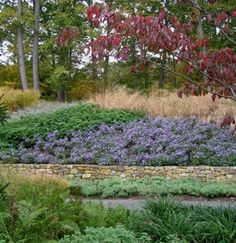 Landscaping with Large Swaths of Natives, Drought Tolerant and Deer Resistant Perennials, Trees and Shrubs Deer Resistant Garden, Deer Resistant Perennials, Tree Borders, Garden Borders, Natural Landscaping, Fence Landscaping, Plant Design, Garden Design, Garden Inspiration