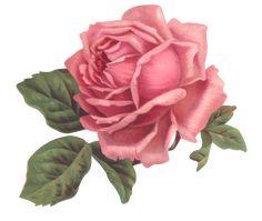 laminas para decoupage y scrapbook Vintage Cards, Vintage Paper, Vintage Postcards, Vintage Images, Vintage Rosen, Flash Art, Botanical Drawings, Vintage Flowers, Flower Art