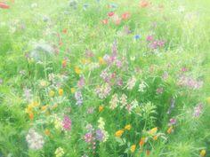 #wild #flowers #wildflowergarden #garden #dulwich #park