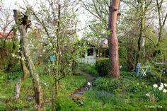 Madelief's beautiful garden.