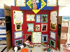 science fair ideas - a few nice presentation ideas (adding top section to hold tri-fold open; objects placed on display board) Science Fair Poster, Science Fair Board, Science Fair Projects Boards, Science Art, Science For Kids, School Projects, Preschool Science, Isaac Newton, Project Board