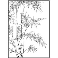 Bamboo plant rubber stamp x 5 Art Sketches, Art Drawings, Flower Drawing Tutorials, New Year Art, Bamboo Art, Plant Drawing, Flower Doodles, Colouring Pages, Art Sketchbook