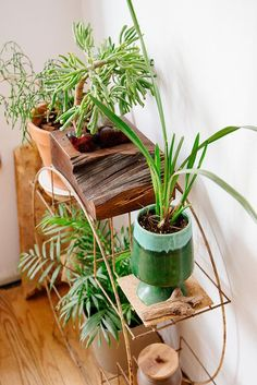 aphelia: untitled by d a b i t o on Flickr. #houseplantsdisplay