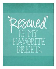'Rescued' is my favorite breed. #NMDR #rescued