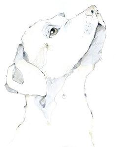 labrador dog zeichnung hund drawing illustration