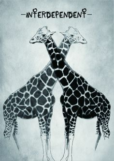 Interdependent. Shows two giraffes connecting to one another.