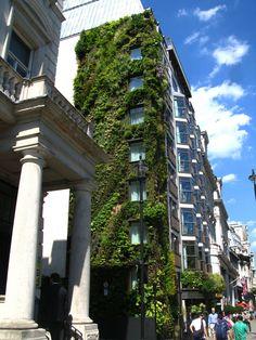 Athenaeum Hotel, London | Vertical Garden Patrick Blanc