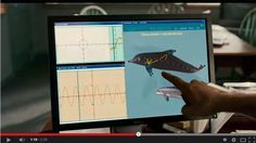 """A Dolphin Tail and Prosthetics Engineering"": In movies like Dolphin Tale, you don't have to look far to find the #engineering design process in action. [Source: Science Buddies, http://www.sciencebuddies.org/blog/2015/01/a-dolphin-tail-and-prosthetics-engineering.php?from=Pinterest] #STEM #science"