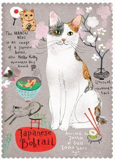 Japanese bobtail cat from Postallove