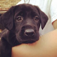 My precious black lab puppy!